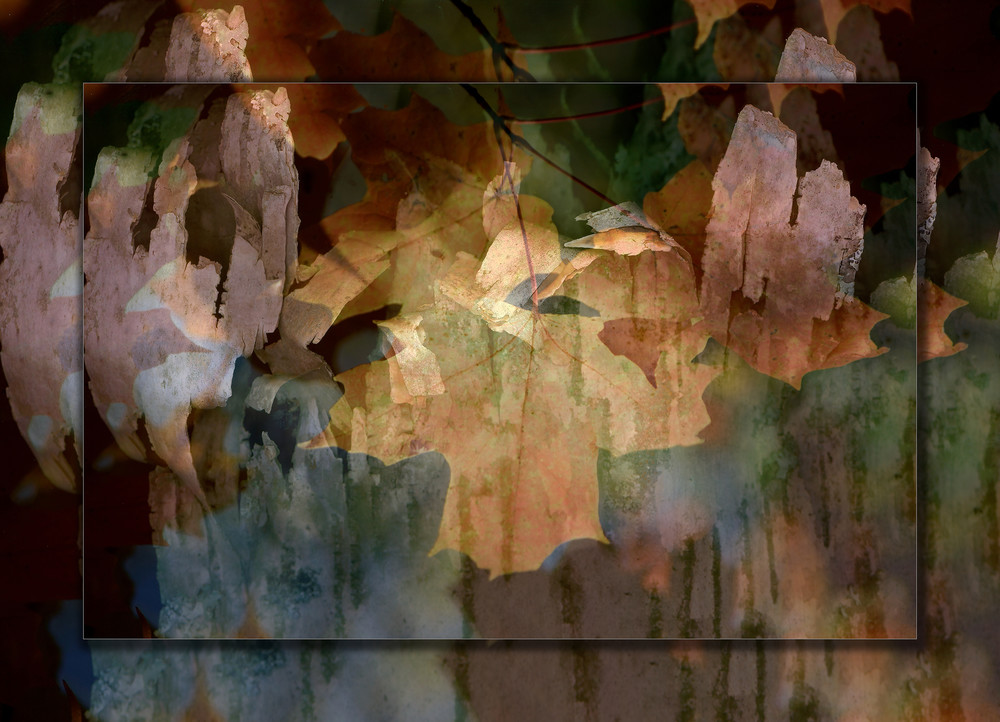 Abstract Leaf 3 D Photography Art | Whispering Impressions
