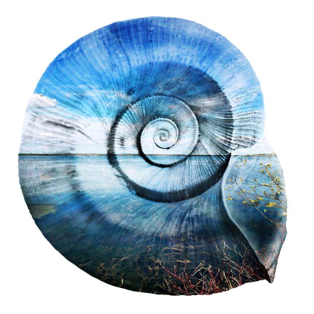 Fishookshell Asf  Art | studio176