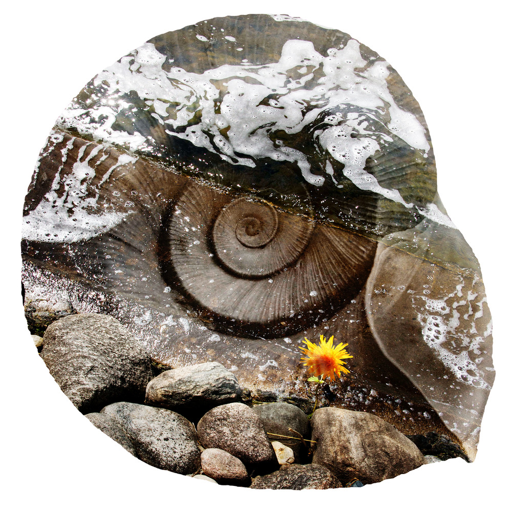 Rock Shell  Art | studio176