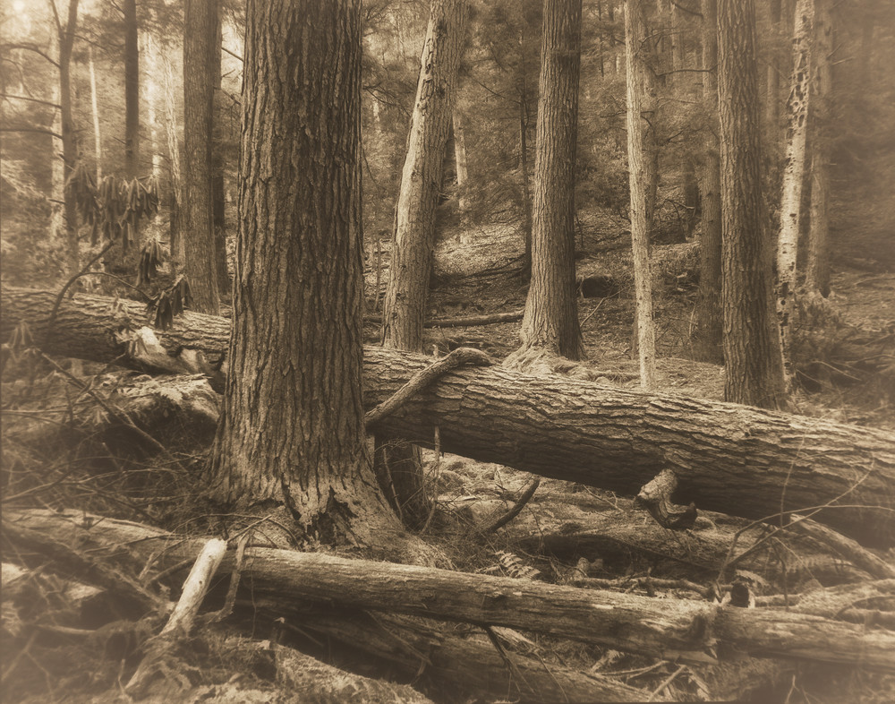 Cooks Forest 01 Photography Art | Mark Steele Photography Inc