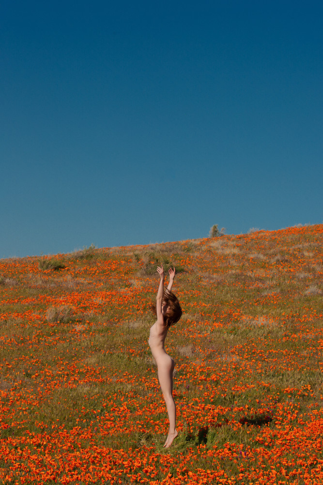 With the Wildflowers II
