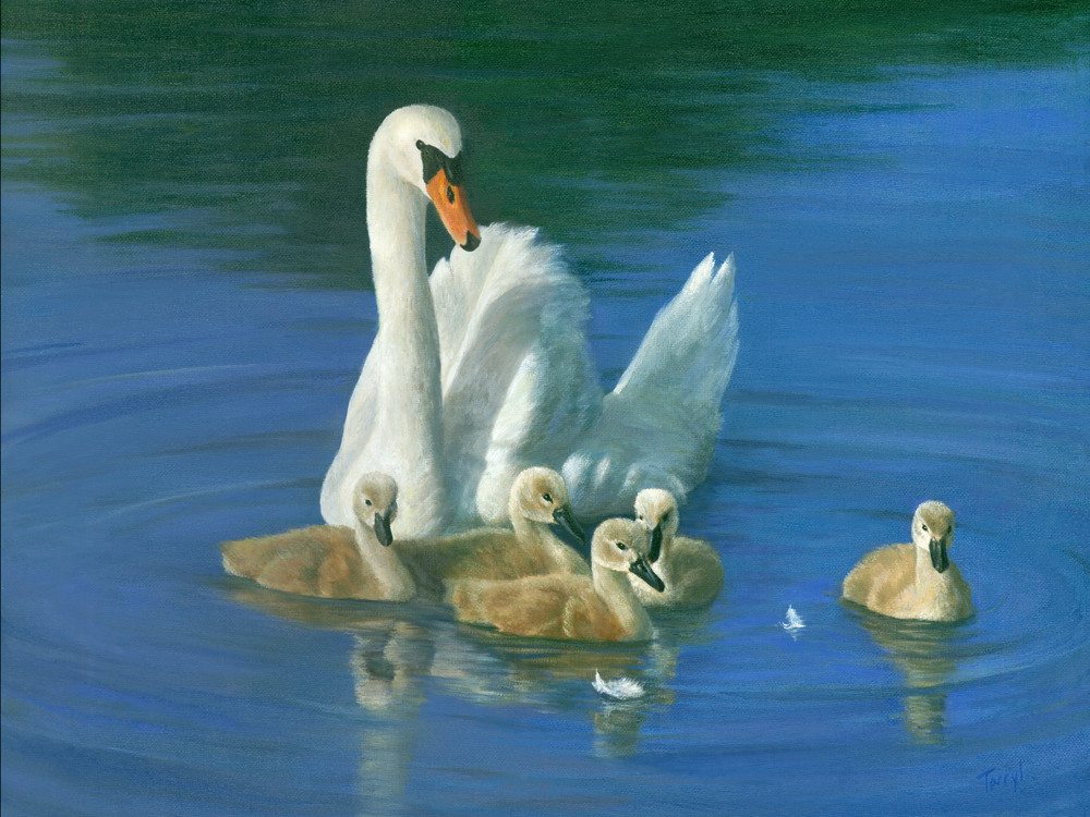 swan, goslings, spring-babies, mother-swan