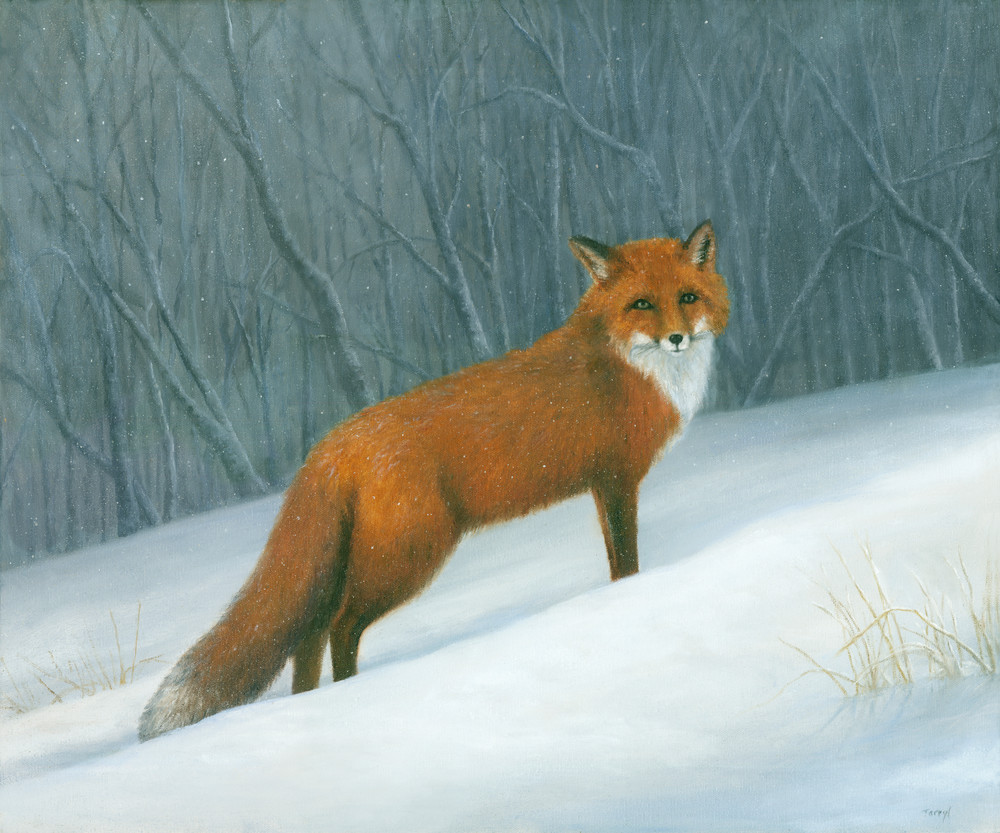 Red-fox, winter, snow-painting