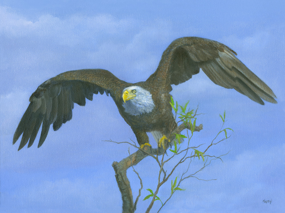 bald-eagle, taking-flight