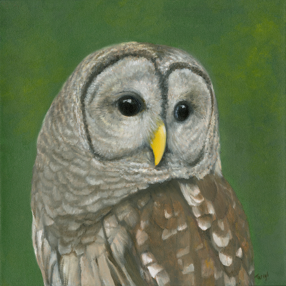 barred-owl, watchful-eyes, owl-painting