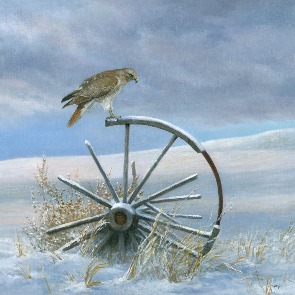 hawk, redtail, redtail-hawk, old-broken-wagon-wheel, wagon-wheel