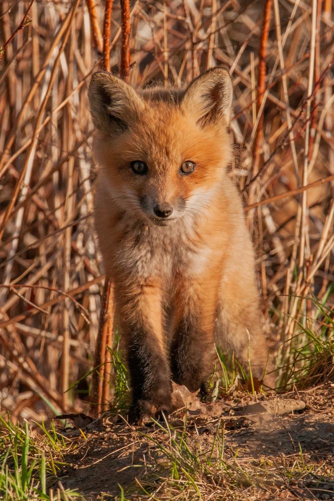 Ferocious Animal Photography Art | Monteux Gallery
