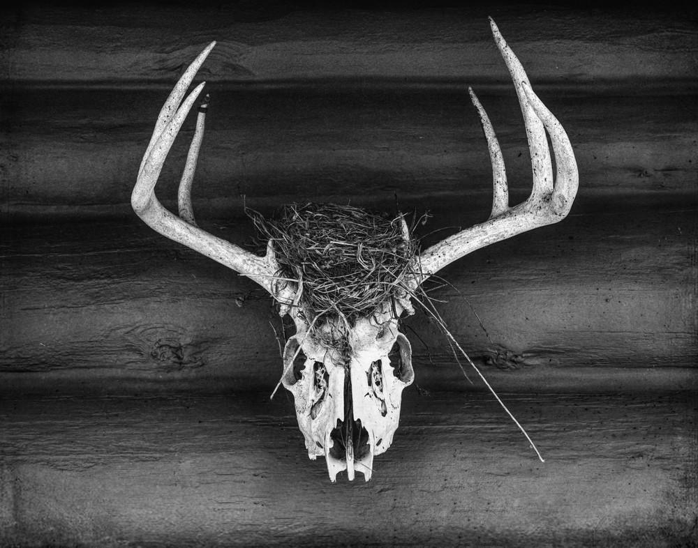 Nest - Deer, by Jeremy Simonson