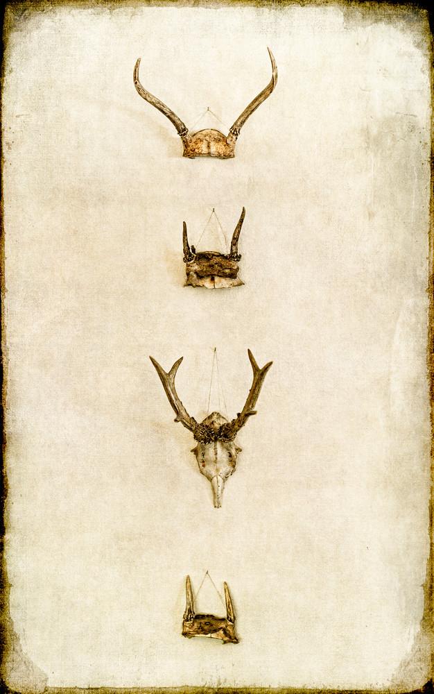 Skull Chaplets