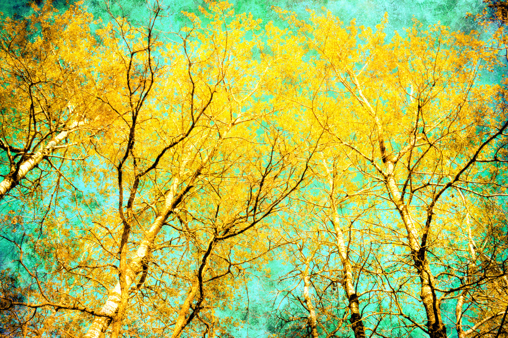 Spring Birch, by Laura Grisamore