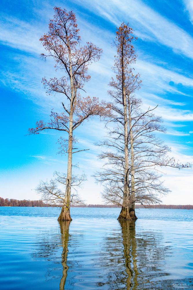 Cypress Trees Reflection 478   Photography Art | Koral Martin Healthcare Art