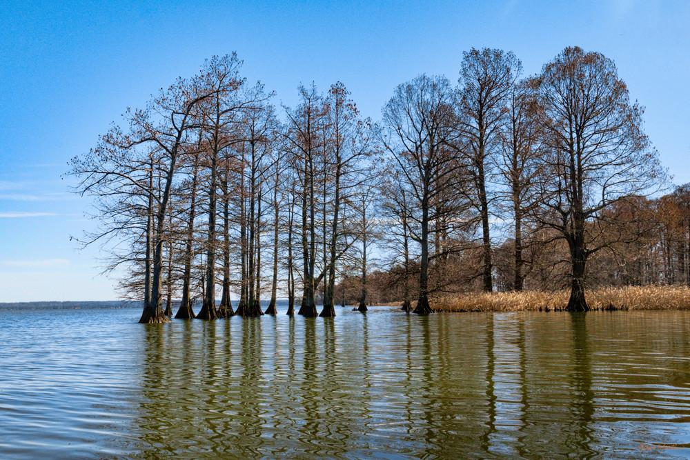 Reelfoot Lake Reflections 5538   Photography Art | Koral Martin Healthcare Art