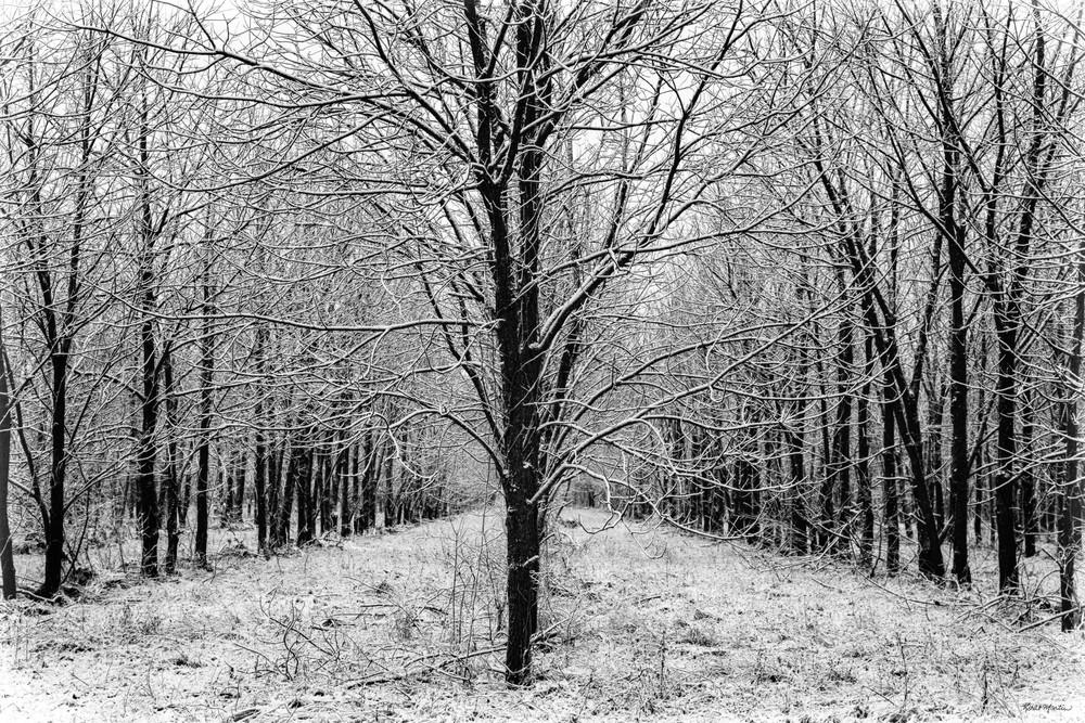 Harmony Tree Grove 4136   Photography Art | Koral Martin Healthcare Art