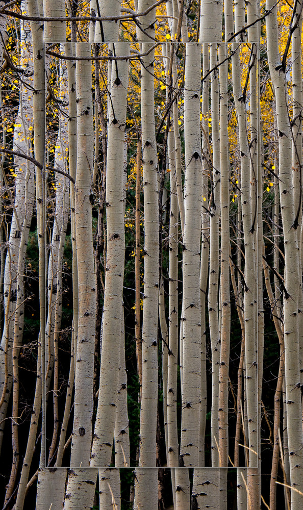 Aspen Vertical Lines 3 D Photography Art | Whispering Impressions