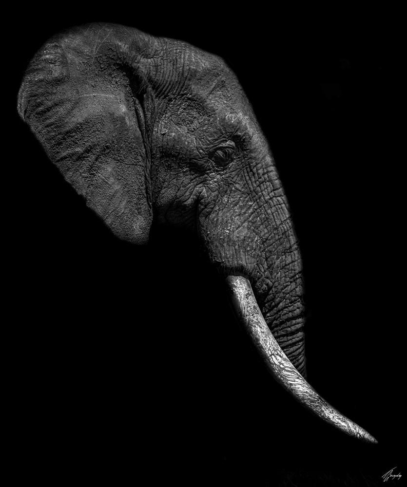 Fine Art Photography Print - Broken Tusk 2 (dark)