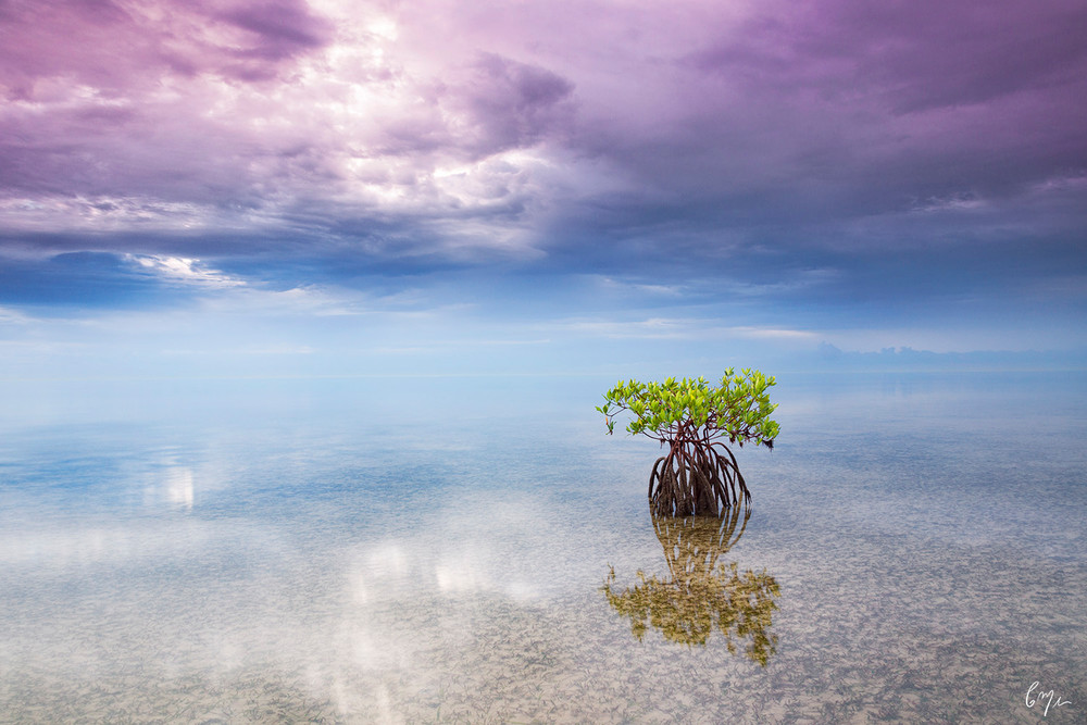 Constance Mier - fine art nature photographer's stunning images of Biscayne Bay