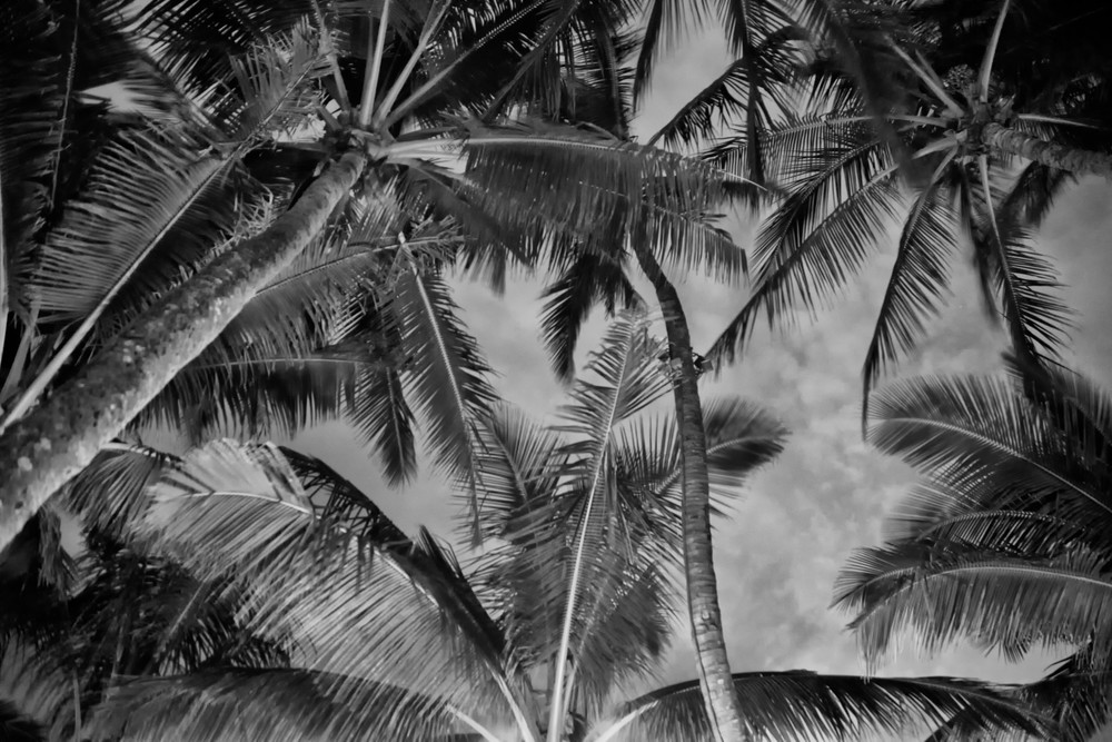 Mama S Palms 2 Photography Art   Rosanne Nitti Fine Arts