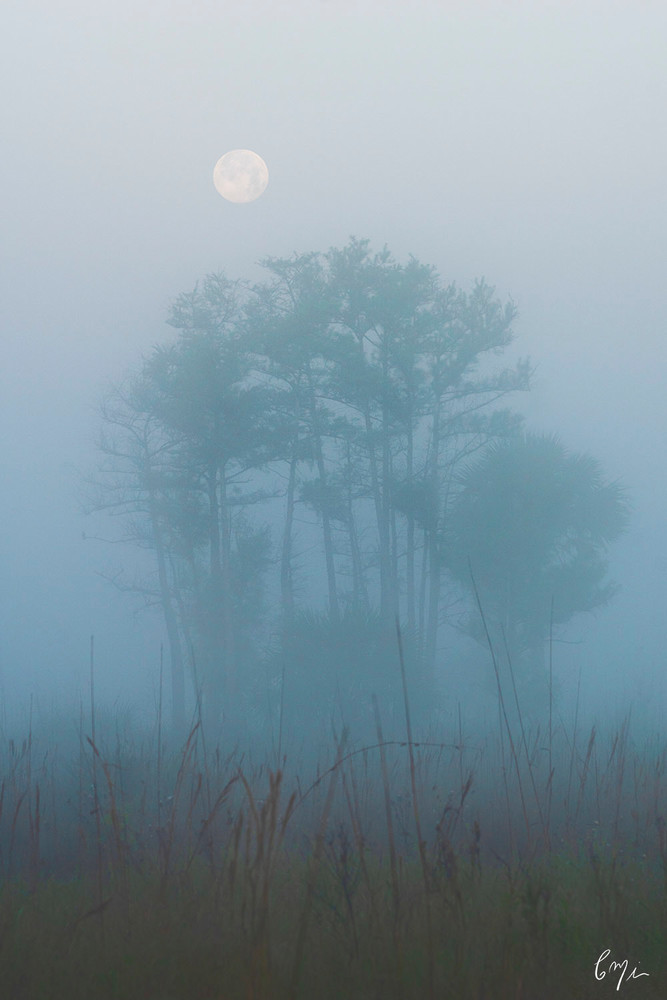 Constance Mier - Fine art photographs from Florida's Everglades