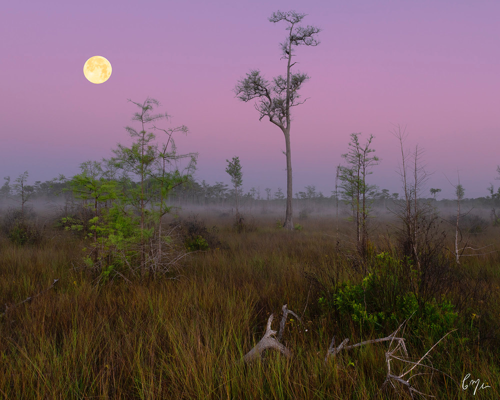 Big Cypress Super Moon Photography Art | Constance Mier Photography