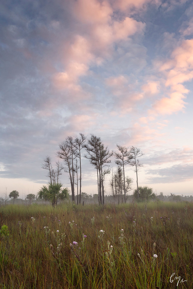 Constance Mier Everglades Photography - fine art prints of Florida's wilderness areas