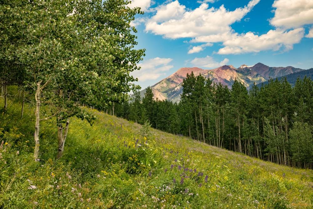 Snodgrass Trail Flowers Mountains 7097   Photography Art | Koral Martin Healthcare Art