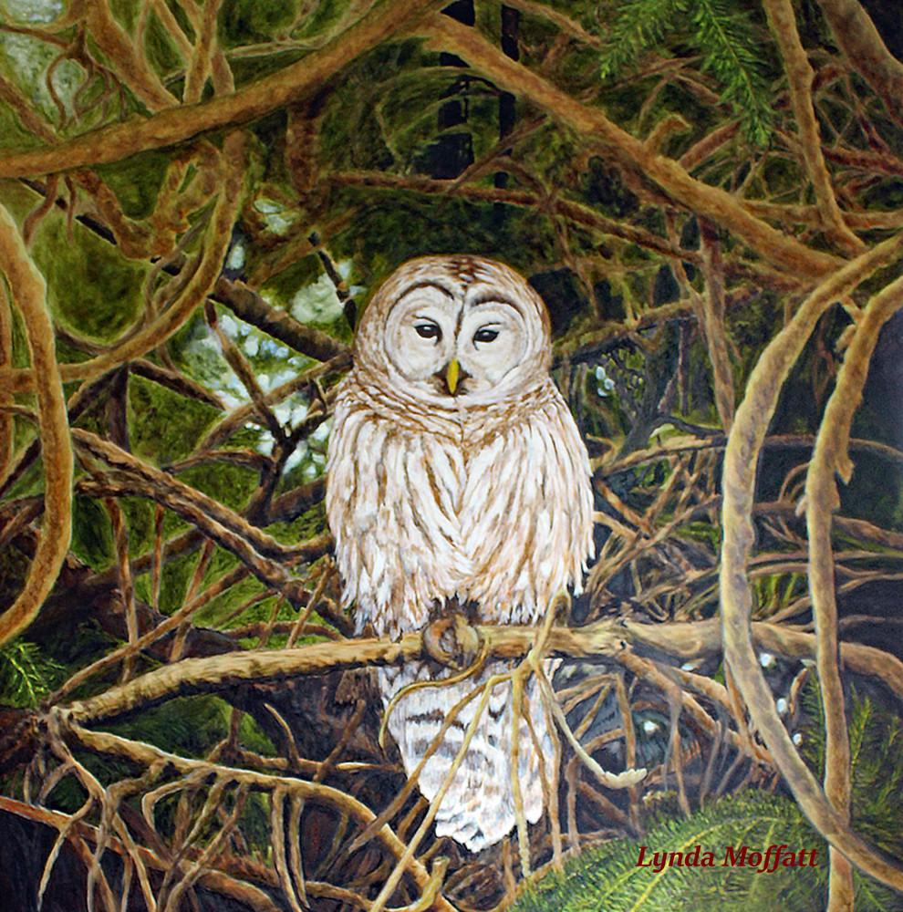 Naturally Framed Art | Lynda Moffatt Fine Arts