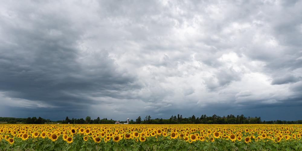 Sunshine when it Rains IV by Jeremy Simonson