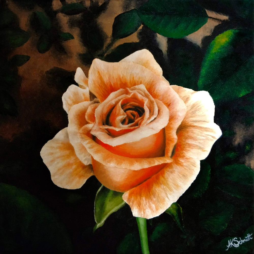 Winter Sunset Rose Bloom by Ashley Koebrick Schmidt