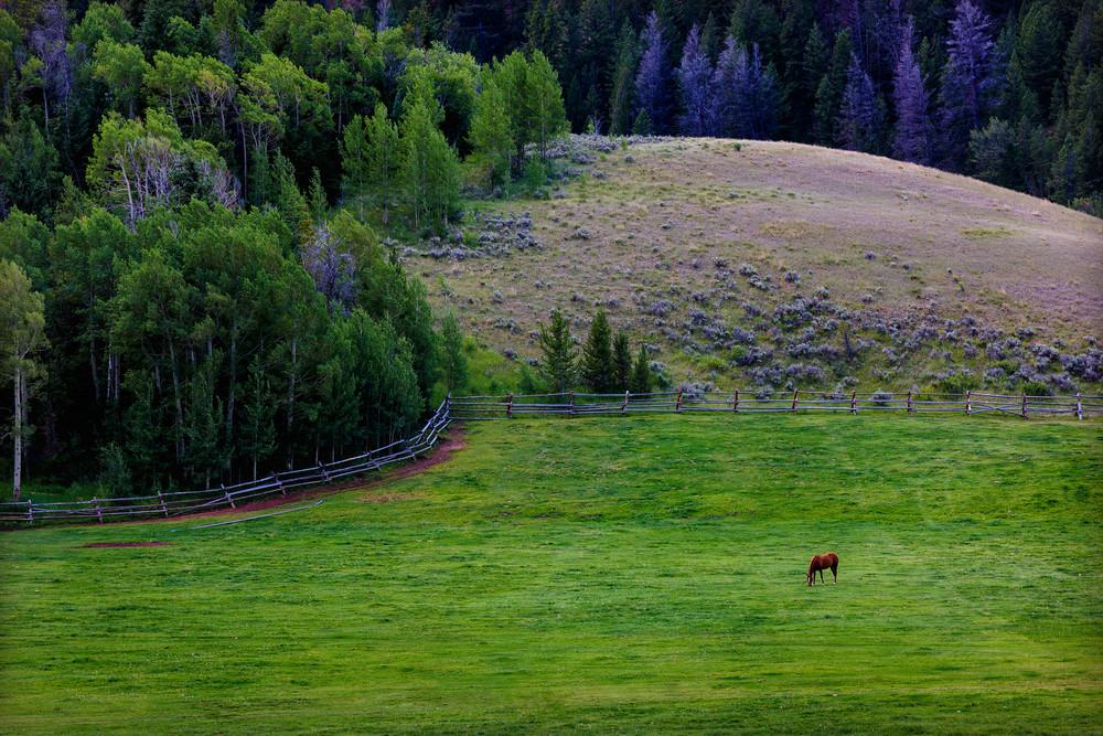 Horse Farm near Slide Lake, Jackson Hole, Wyoming