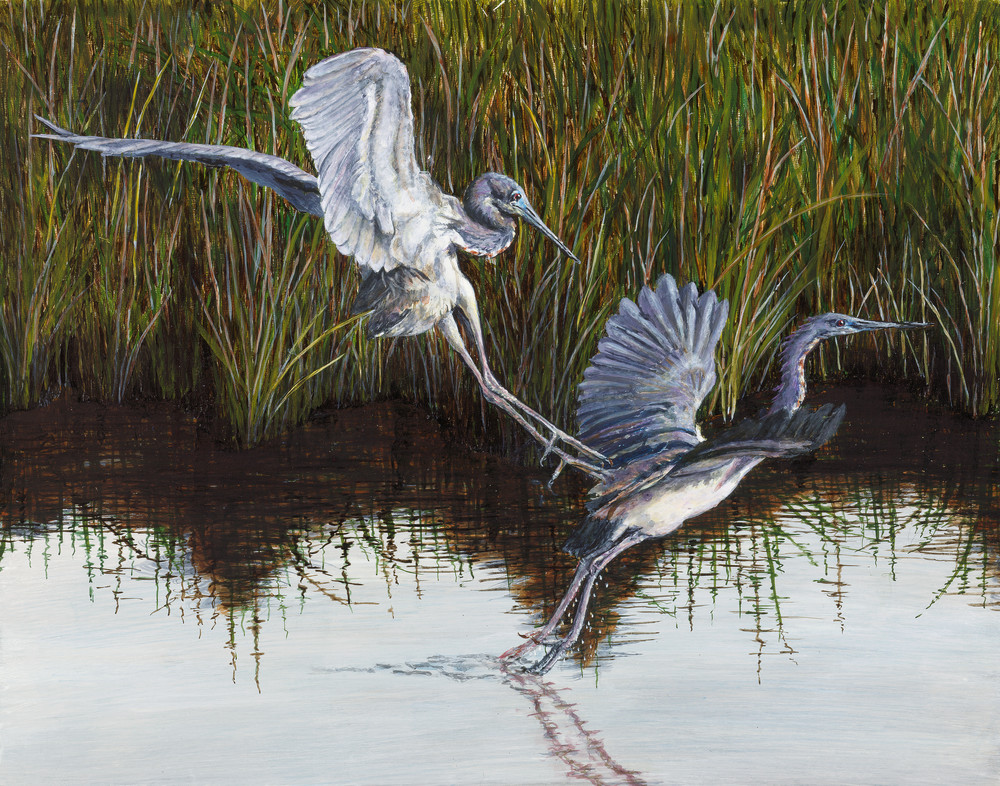 """Monday Morning Blues""   Tricolored Herons Art 