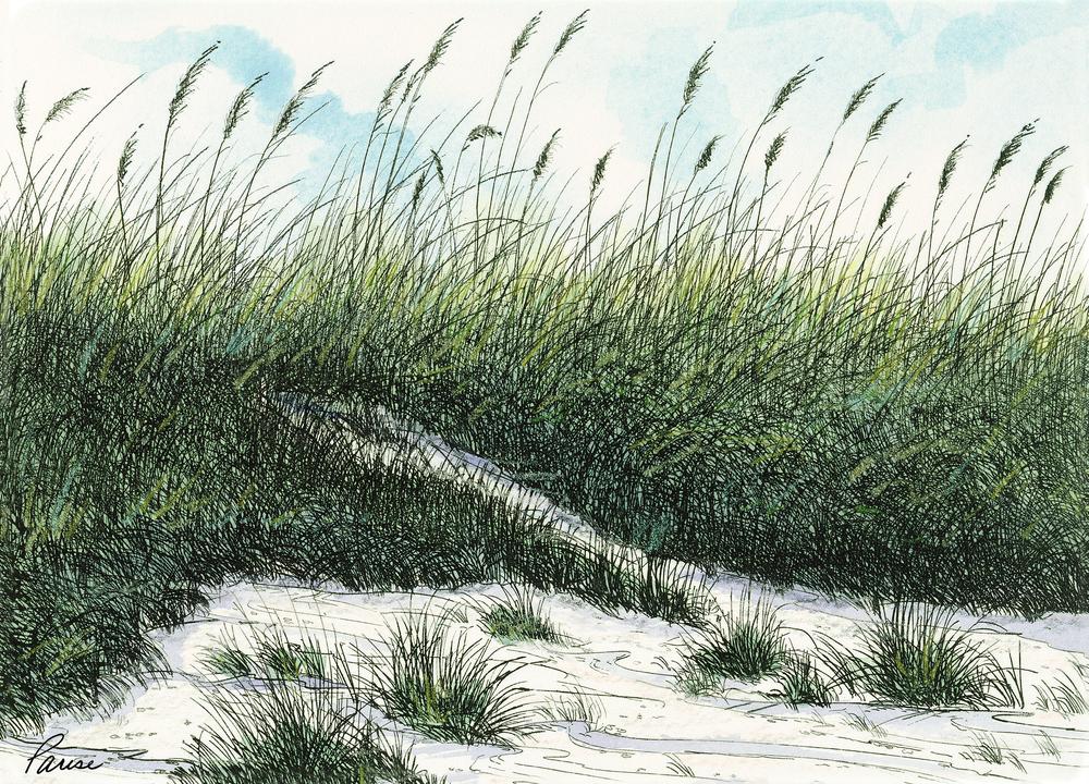 Carolina Dunes