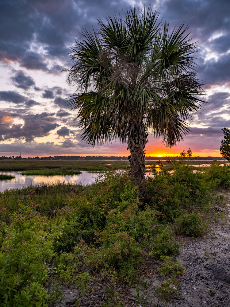 sunset_palmetto