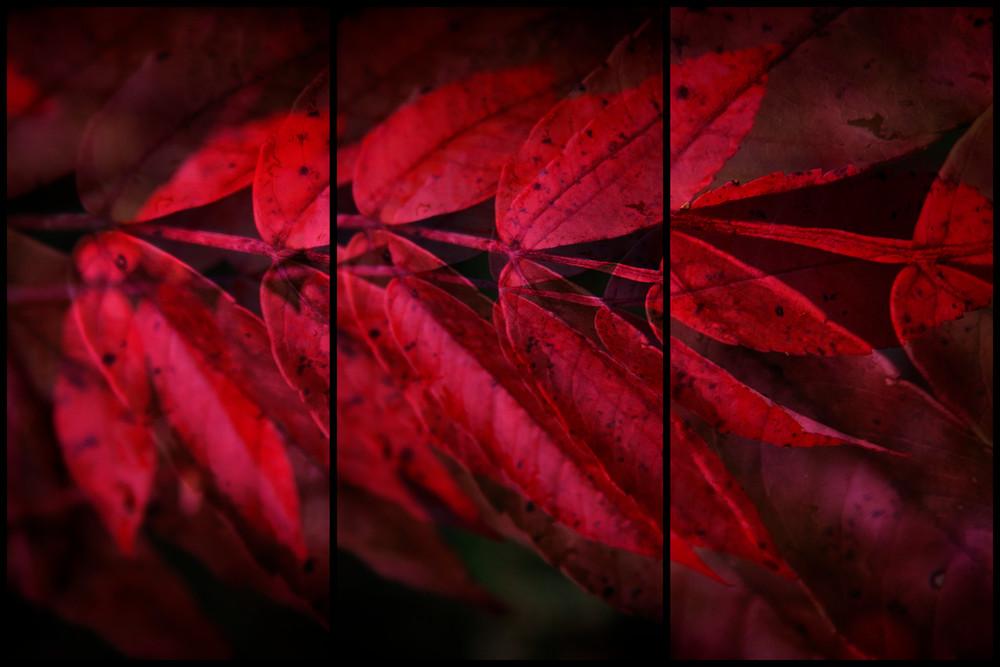 Miskobag III (a red leaf) by Jeremy Simonson