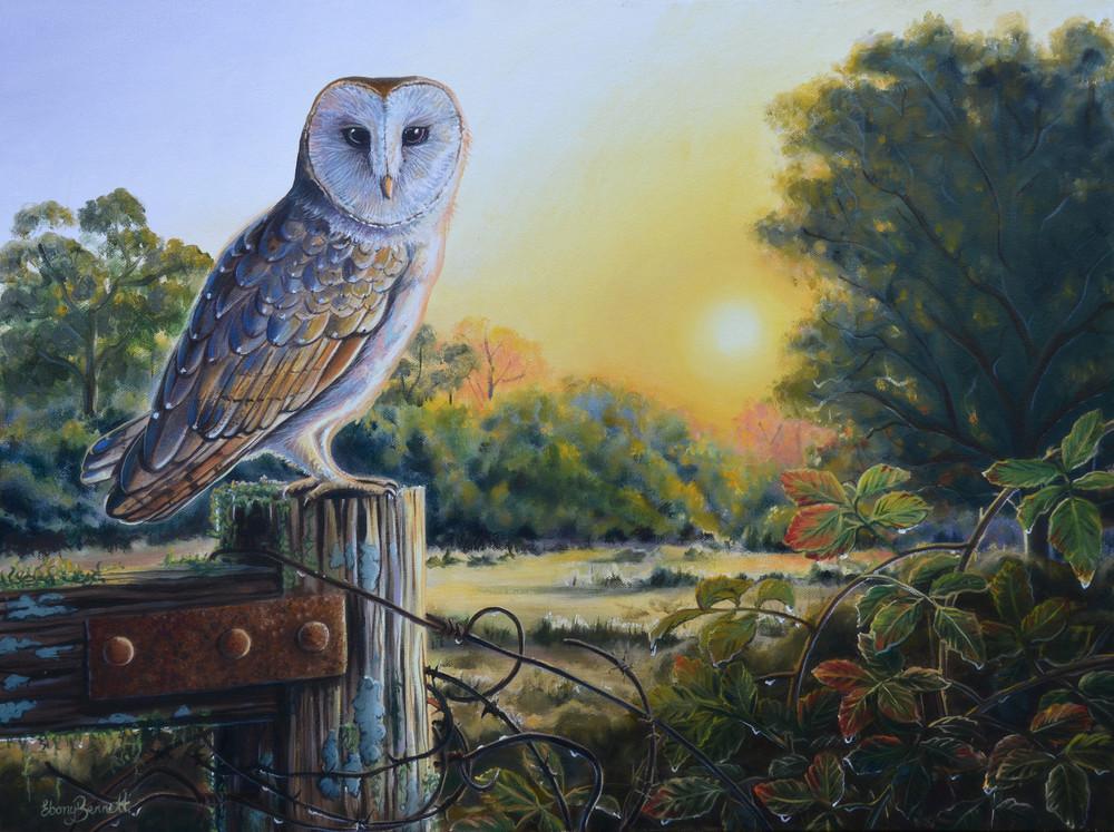Barn Owl - Sunset after the Rain