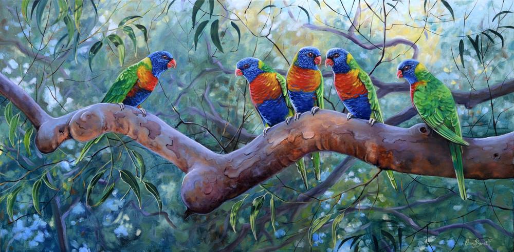 Rainbow Lorikeets - Angophora Gossip