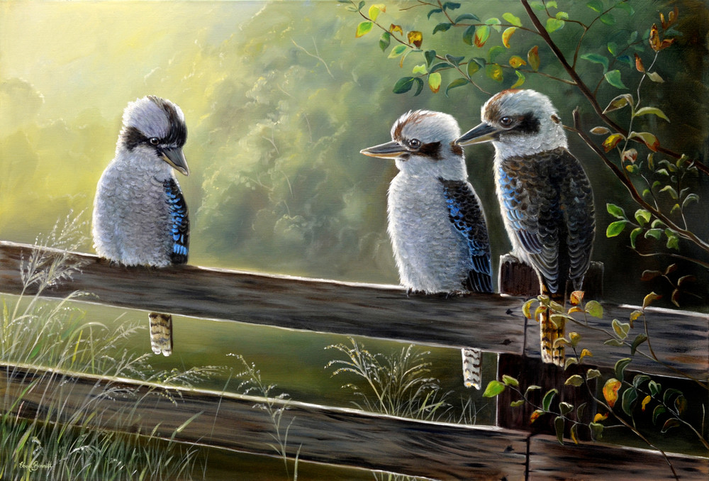 Kookaburras - Morning Meeting