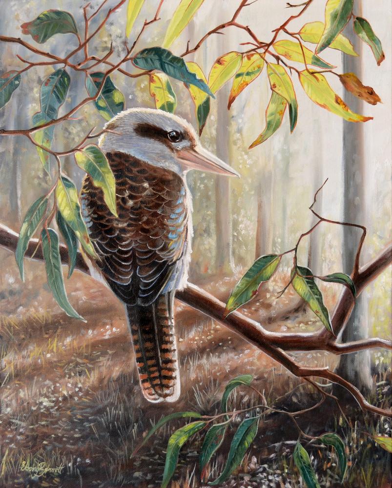 Kookaburra - Wallaby Gully