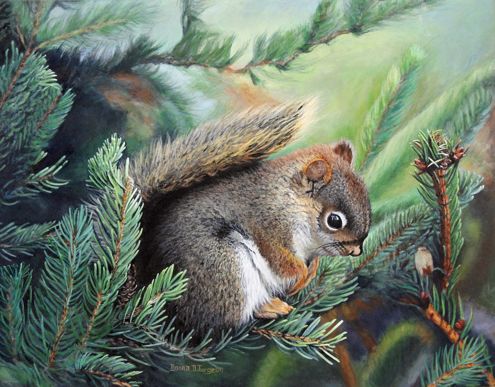 Baby Red Squirrel  Art | artalacarte