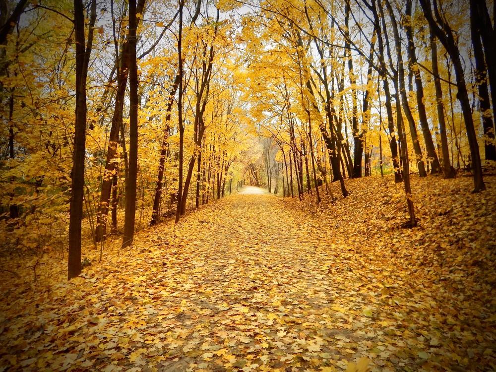 Golden Path Photography Art   CJ Harding