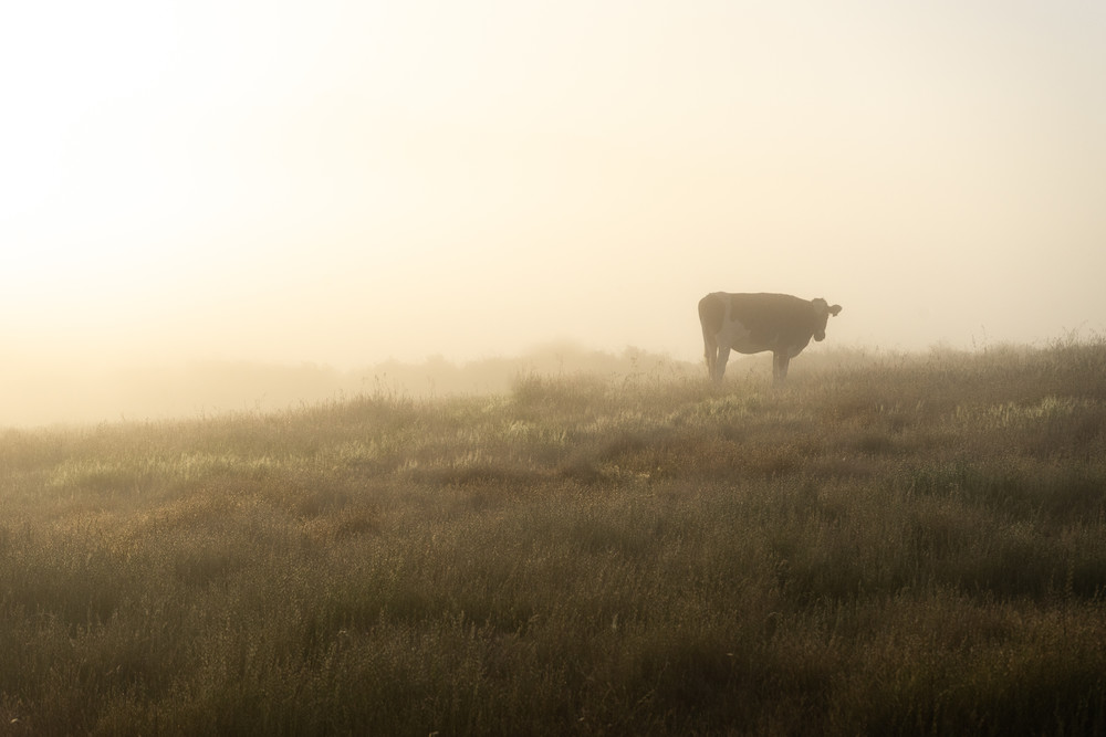 Contemplation - foggy sunrise on a farm in Northern California photograph print