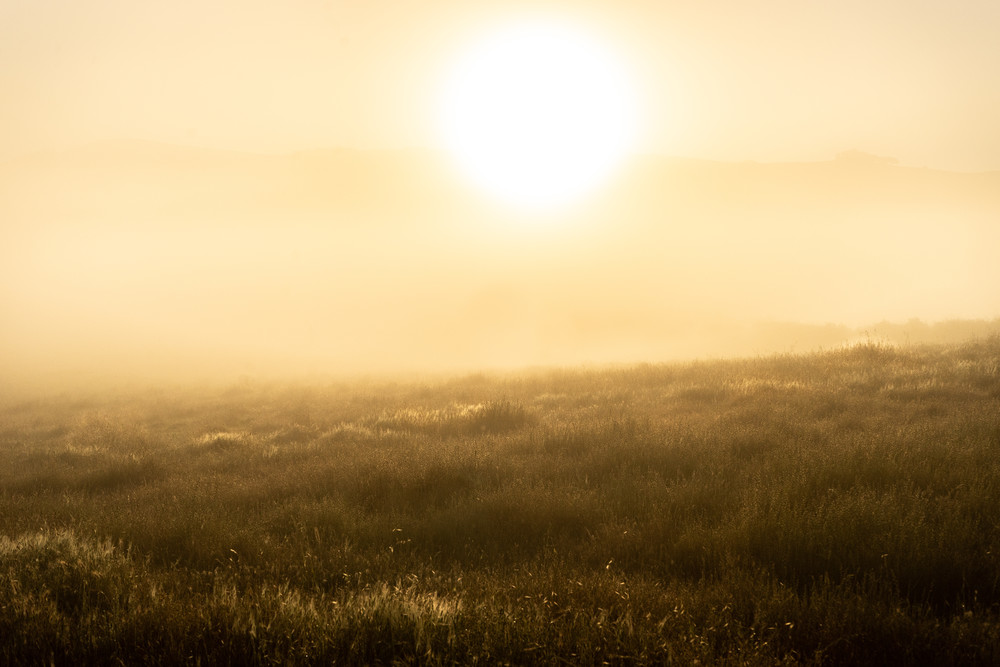 On the Rise - Foggy morning sunrise on the coast in Northern California photograph print