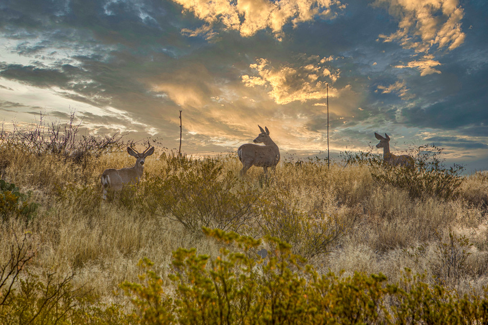 A sunrise at Big Bend National Park Texas with the Deer