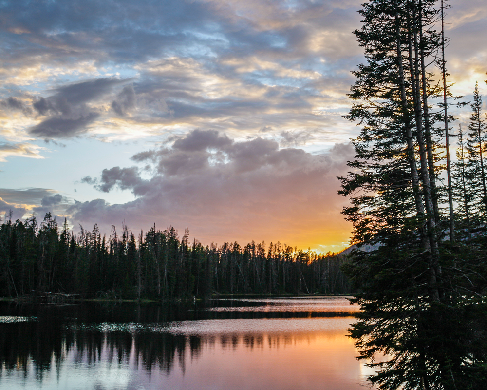 Lake Yellowstone Photography Art | Happy Hogtor Photography