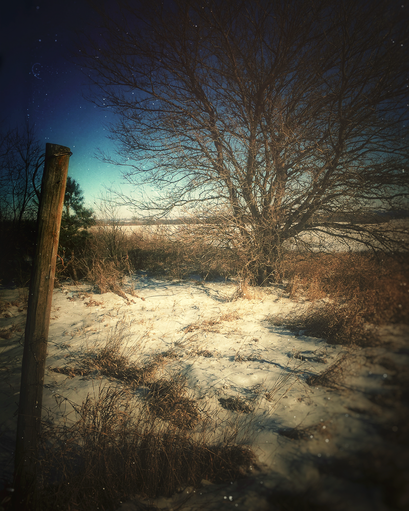 Fencepost In The Snow Photography Art   Happy Hogtor Photography