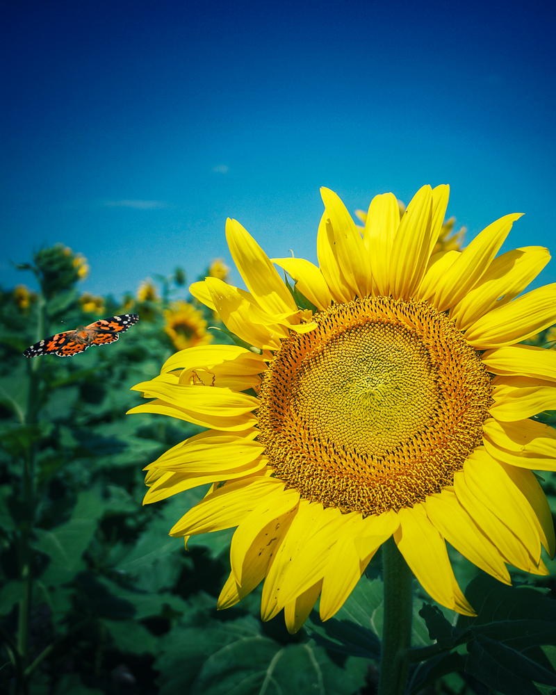 Butterfly Photobomb Photography Art | Happy Hogtor Photography