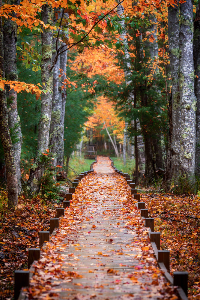 Autumn At Jesup Path Photography Art | Jesse MacDonald Photography
