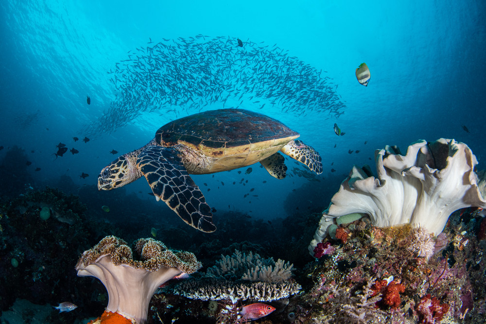 Turtle and Fish is a fine art photograph for sale