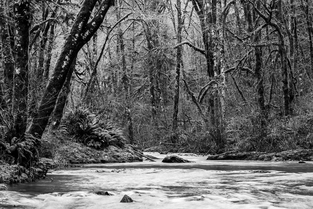 Forest Along Cedar Creek, Capitol State Forest, Washington, 2015