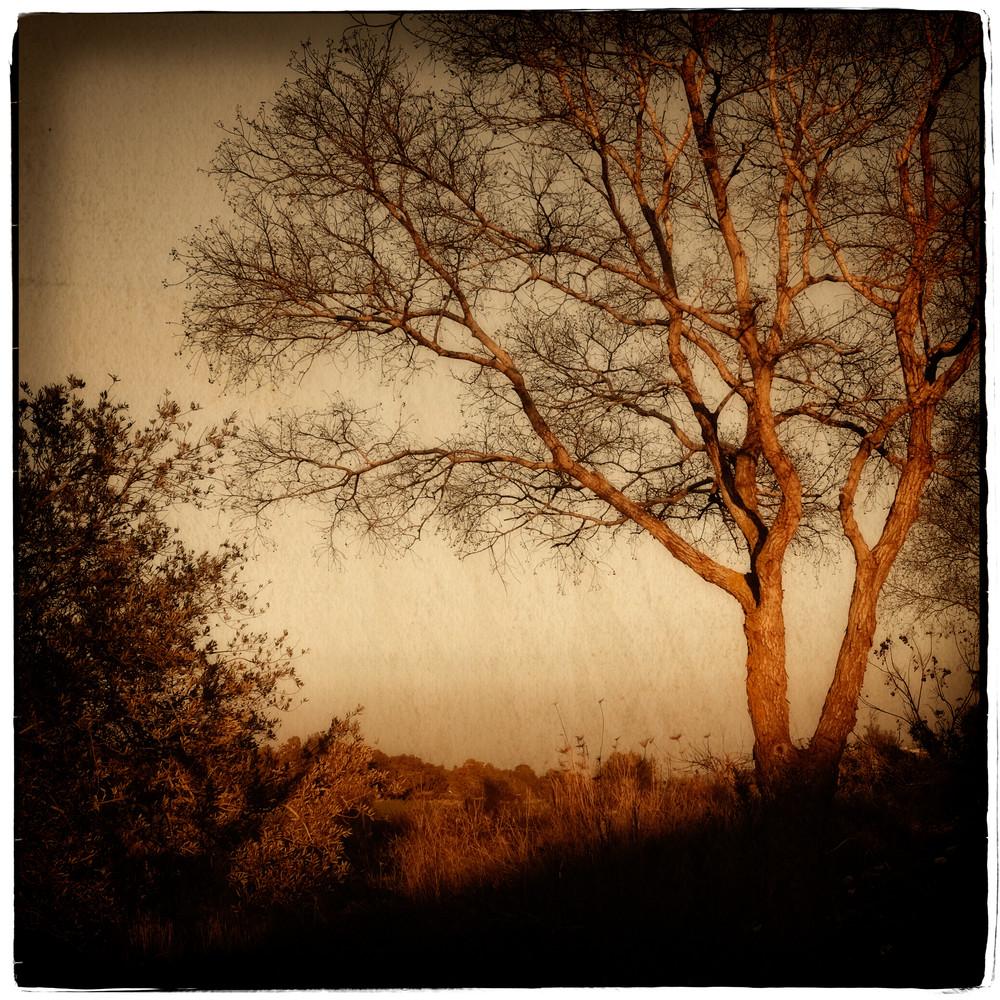 Mulberry Yellow Sunset Photography Art   David Frank Photography