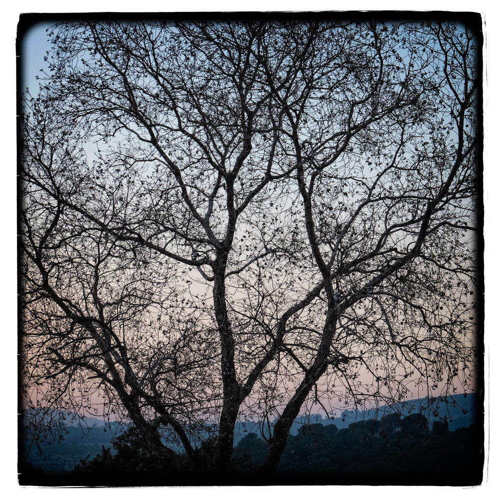 Mulberry Blue Sunset Photography Art | David Frank Photography